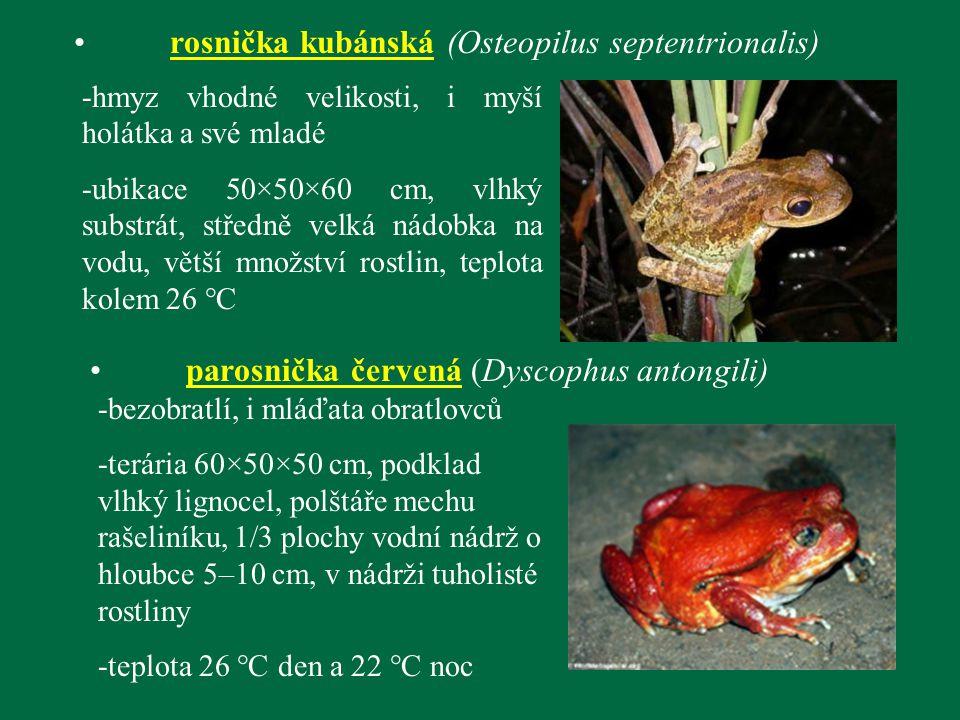rosnička kubánská (Osteopilus septentrionalis) -hmyz vhodné velikosti, i myší holátka a své mladé -ubikace 50×50×60 cm, vlhký substrát, středně velká