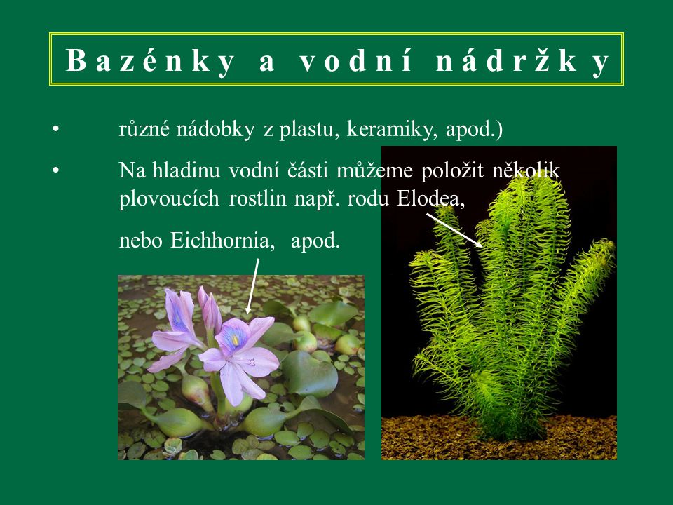 B a z é n k y a v o d n í n á d r ž k y různé nádobky z plastu, keramiky, apod.) Na hladinu vodní části můžeme položit několik plovoucích rostlin např