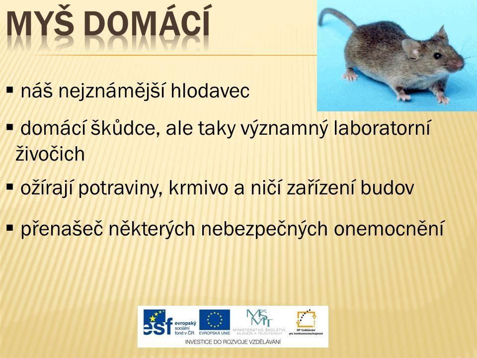  náš nejznámější hlodavec  domácí škůdce, ale taky významný laboratorní živočich  ožírají potraviny, krmivo a ničí zařízení budov  přenašeč některých nebezpečných onemocnění