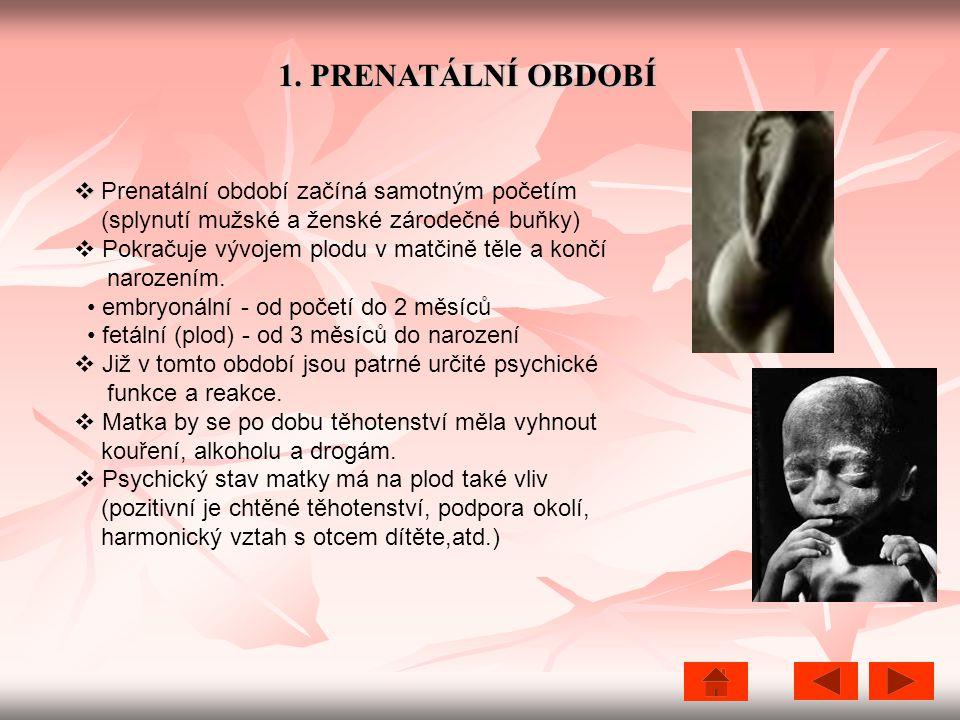 1. PRENATÁLNÍ OBDOBÍ   Prenatální období začíná samotným početím (splynutí mužské a ženské zárodečné buňky)  Pokračuje vývojem plodu v matčině těle