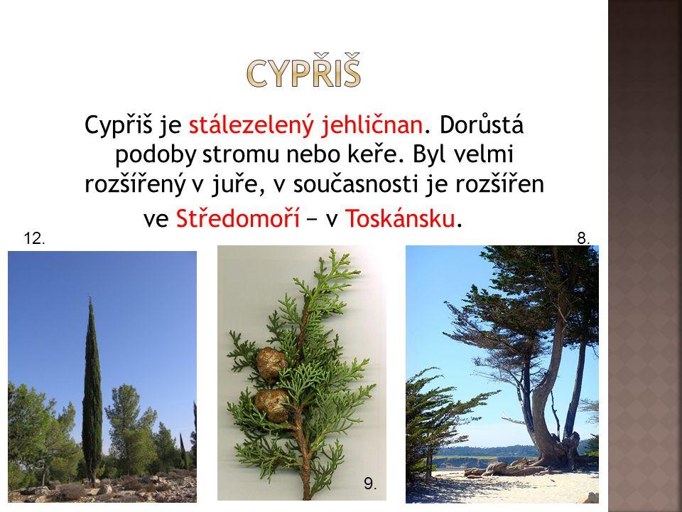 Cypřiš je stálezelený jehličnan. Dorůstá podoby stromu nebo keře. Byl velmi rozšířený v juře, v současnosti je rozšířen ve Středomoří − v Toskánsku. 8