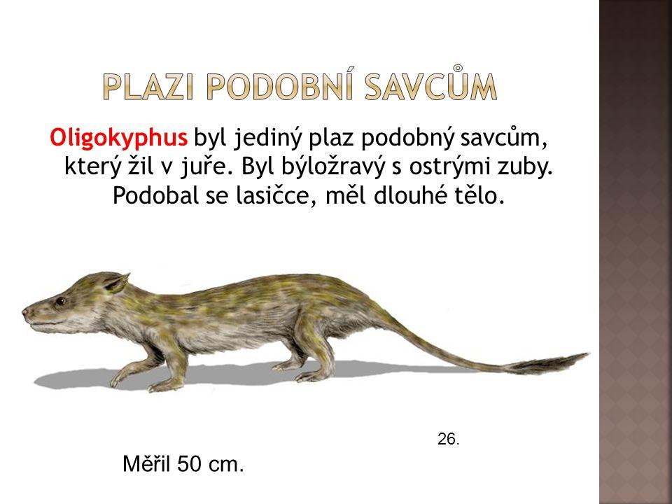 Oligokyphus byl jediný plaz podobný savcům, který žil v juře. Byl býložravý s ostrými zuby. Podobal se lasičce, měl dlouhé tělo. 26. Měřil 50 cm.