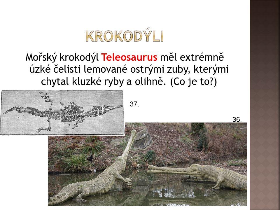 Mořský krokodýl Teleosaurus měl extrémně úzké čelisti lemované ostrými zuby, kterými chytal kluzké ryby a olihně. (Co je to?) 36. 37.