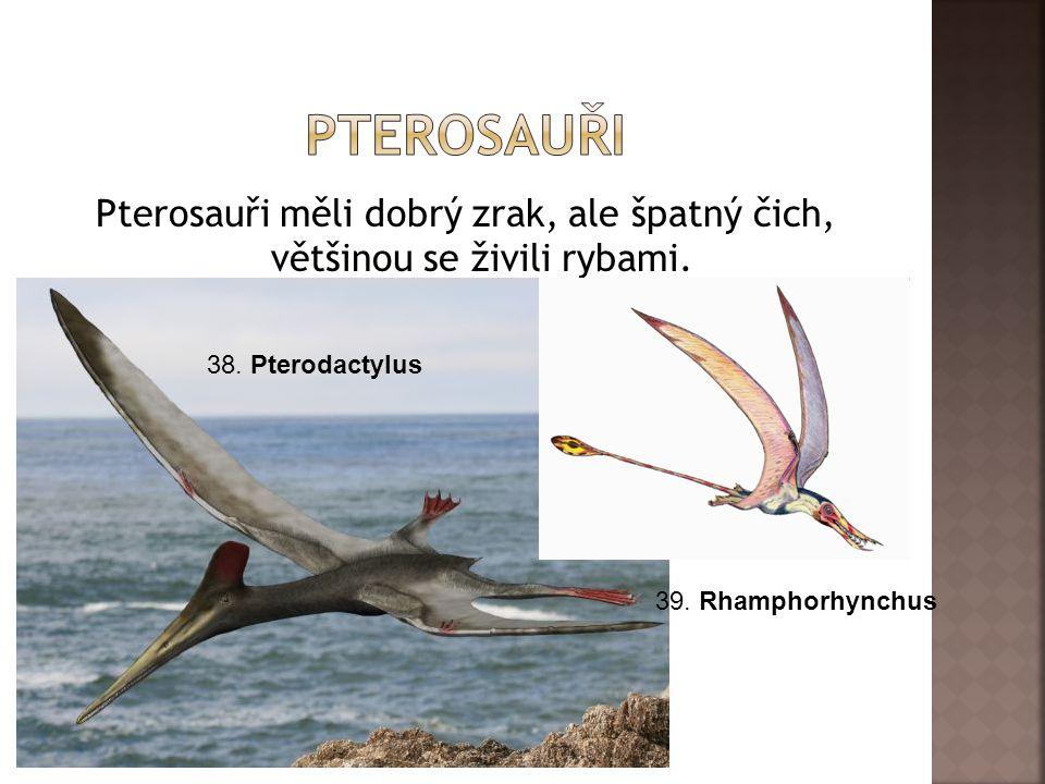 Pterosauři měli dobrý zrak, ale špatný čich, většinou se živili rybami. 39. Rhamphorhynchus 38. Pterodactylus