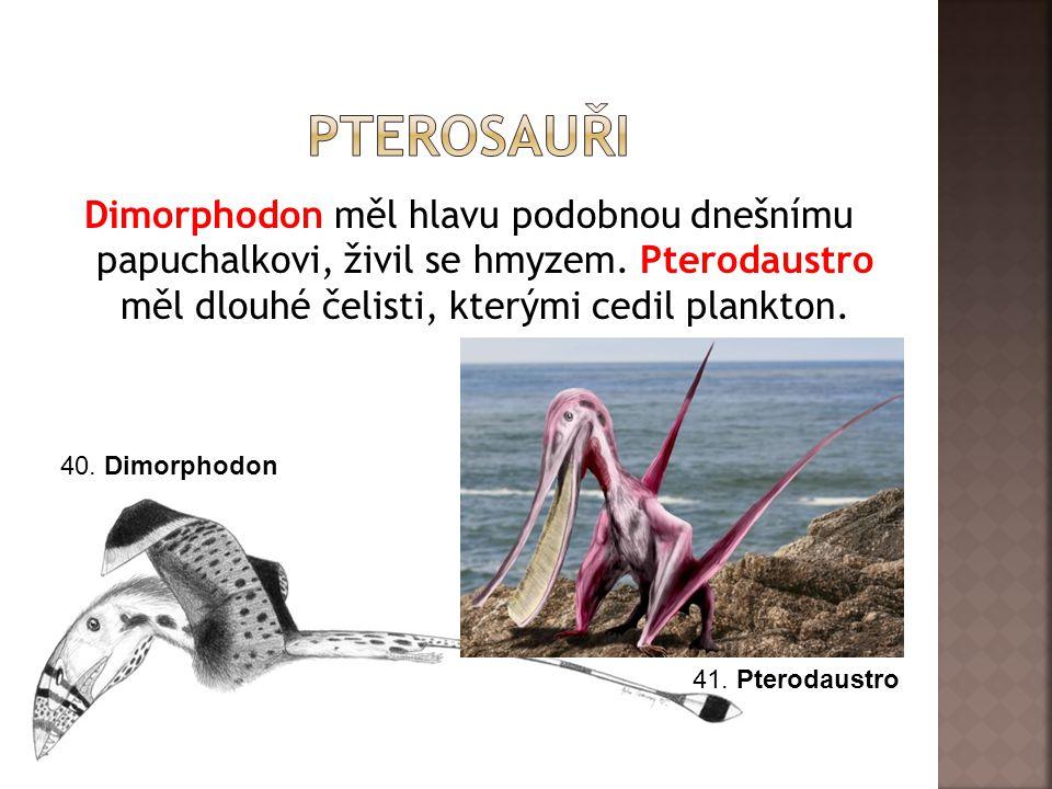 Dimorphodon měl hlavu podobnou dnešnímu papuchalkovi, živil se hmyzem. Pterodaustro měl dlouhé čelisti, kterými cedil plankton. 40. Dimorphodon 41. Pt