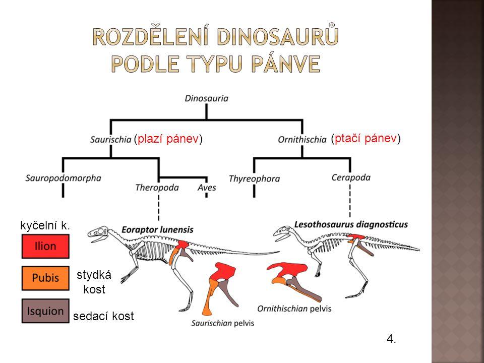 4. (plazí pánev) (ptačí pánev) stydká kost sedací kost kyčelní k.