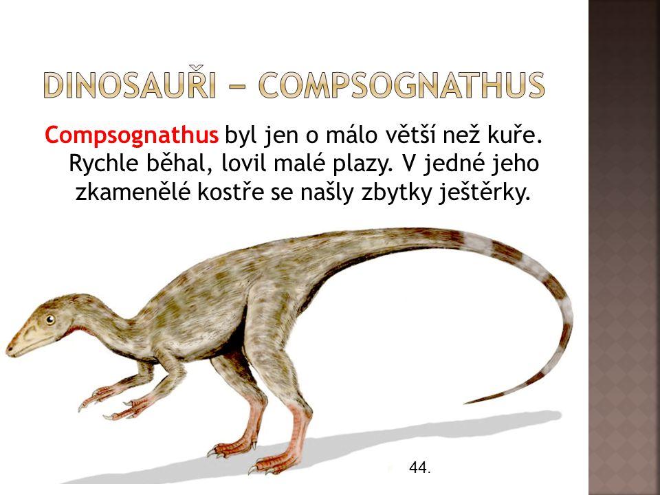 Compsognathus byl jen o málo větší než kuře. Rychle běhal, lovil malé plazy. V jedné jeho zkamenělé kostře se našly zbytky ještěrky. 44.