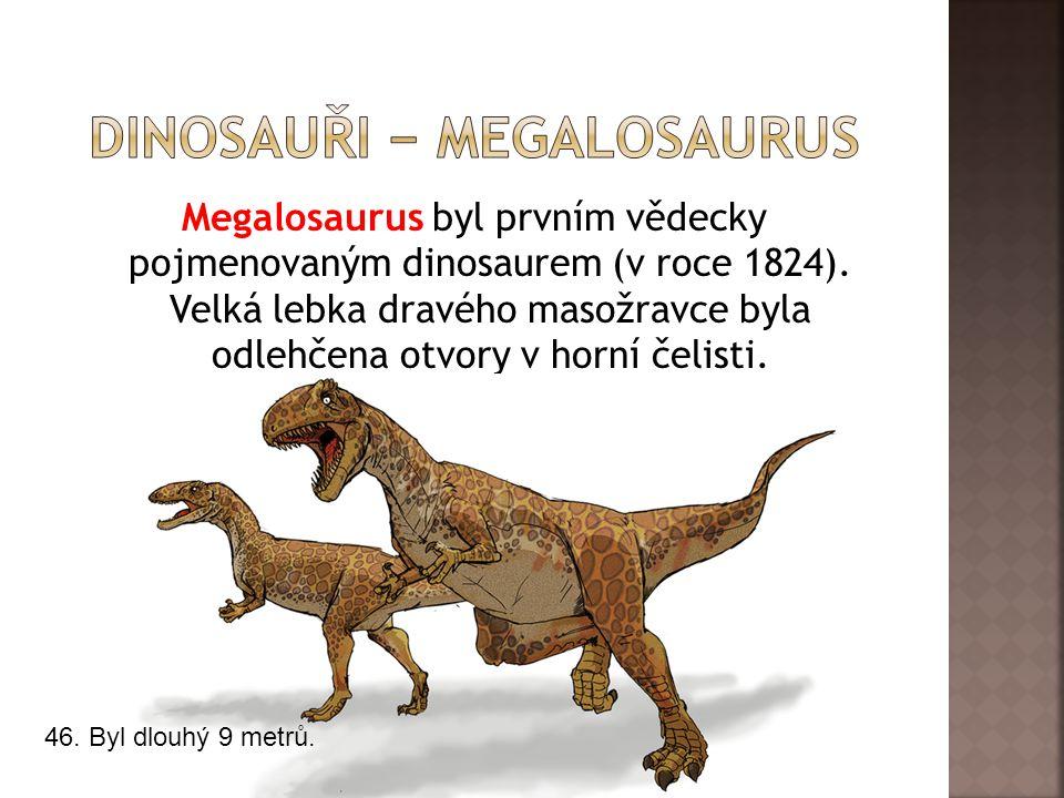 Megalosaurus byl prvním vědecky pojmenovaným dinosaurem (v roce 1824). Velká lebka dravého masožravce byla odlehčena otvory v horní čelisti. 46. Byl d