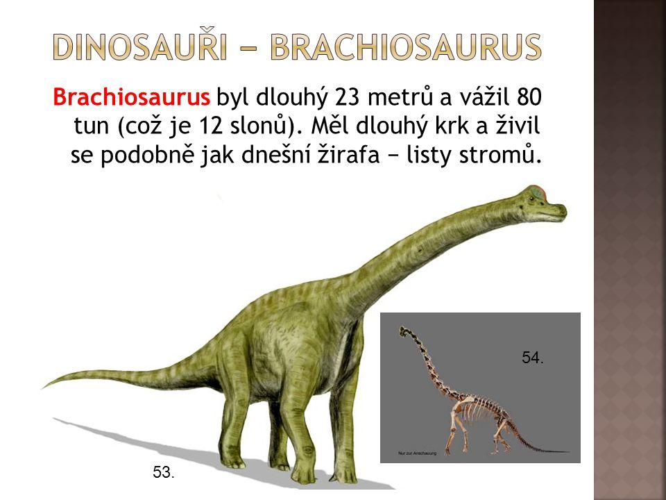 Brachiosaurus byl dlouhý 23 metrů a vážil 80 tun (což je 12 slonů). Měl dlouhý krk a živil se podobně jak dnešní žirafa − listy stromů. 53. 54.