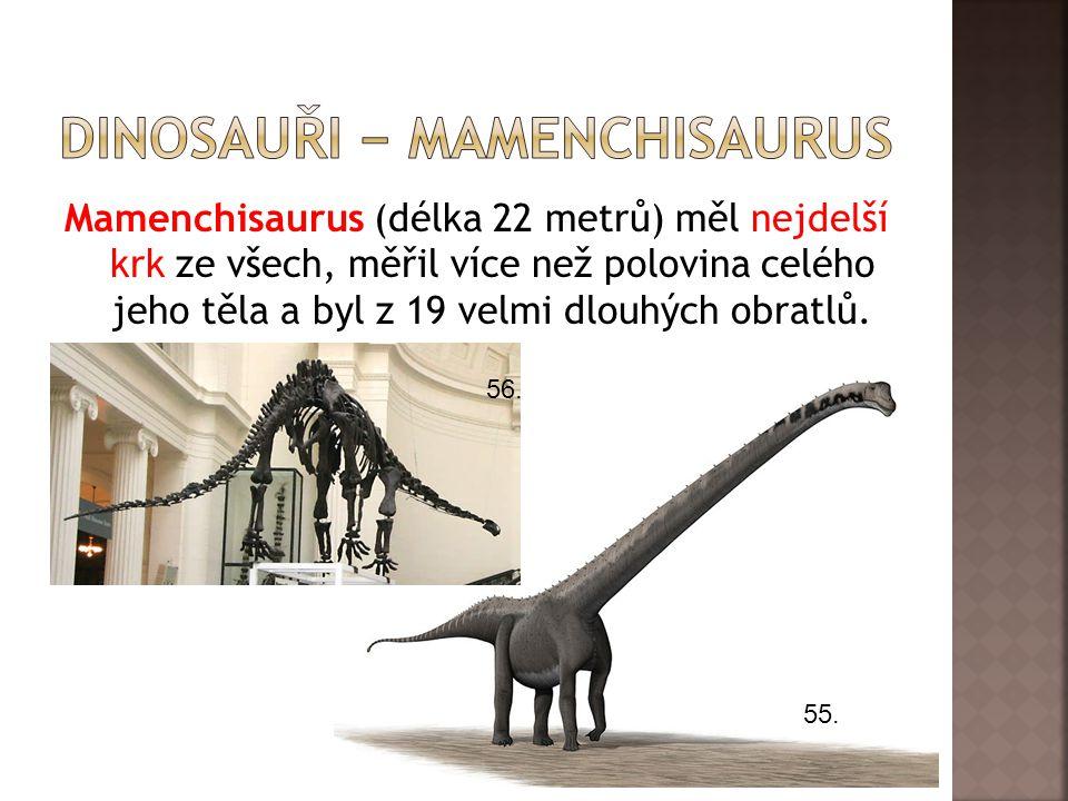 Mamenchisaurus (délka 22 metrů) měl nejdelší krk ze všech, měřil více než polovina celého jeho těla a byl z 19 velmi dlouhých obratlů. 55. 56.