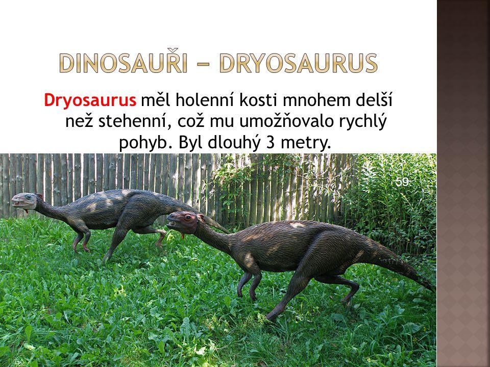 Dryosaurus měl holenní kosti mnohem delší než stehenní, což mu umožňovalo rychlý pohyb. Byl dlouhý 3 metry. 59.