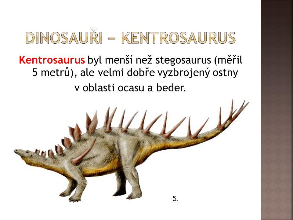 Kentrosaurus byl menší než stegosaurus (měřil 5 metrů), ale velmi dobře vyzbrojený ostny v oblasti ocasu a beder. 5.