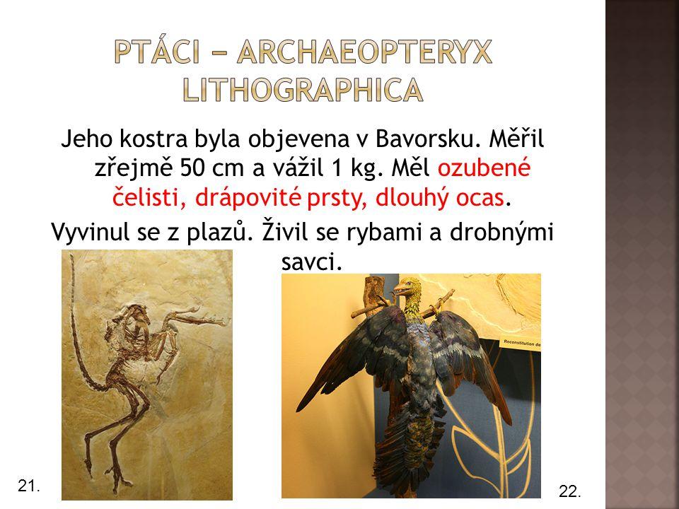 Jeho kostra byla objevena v Bavorsku. Měřil zřejmě 50 cm a vážil 1 kg. Měl ozubené čelisti, drápovité prsty, dlouhý ocas. Vyvinul se z plazů. Živil se