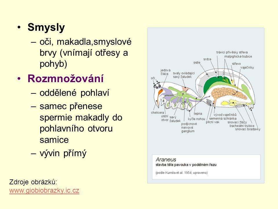 Smysly –oči, makadla,smyslové brvy (vnímají otřesy a pohyb) Rozmnožování –oddělené pohlaví –samec přenese spermie makadly do pohlavního otvoru samice