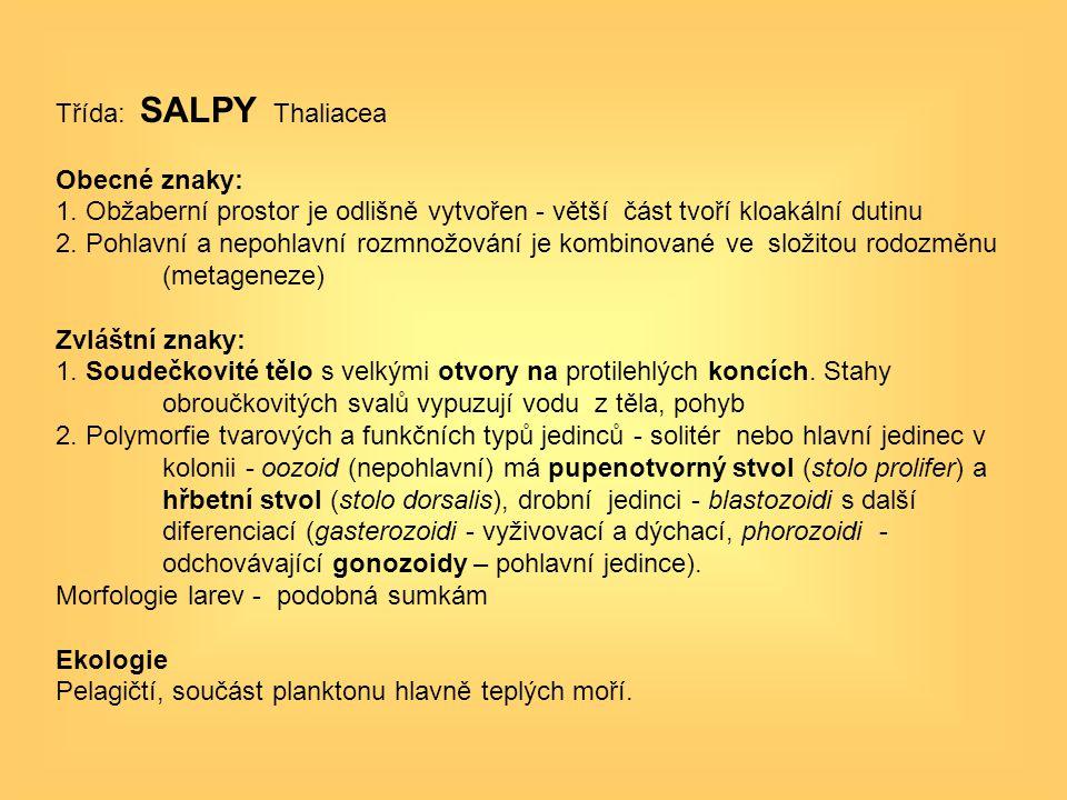 Třída: SALPY Thaliacea Obecné znaky: 1. Obžaberní prostor je odlišně vytvořen - větší část tvoří kloakální dutinu 2. Pohlavní a nepohlavní rozmnožován