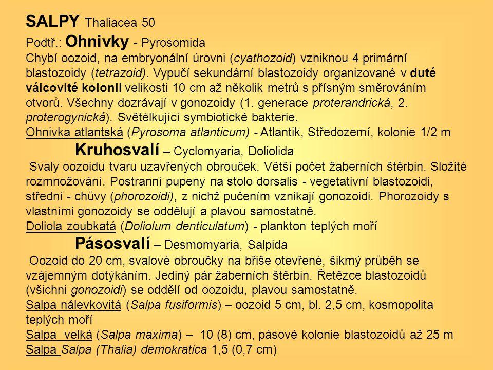 SALPY Thaliacea 50 Podtř.: Ohnivky - Pyrosomida Chybí oozoid, na embryonální úrovni (cyathozoid) vzniknou 4 primární blastozoidy (tetrazoid). Vypučí s
