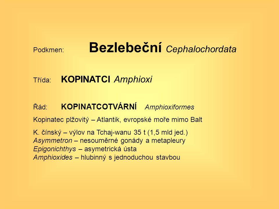 Podkmen: Bezlebeční Cephalochordata Třída: KOPINATCI Amphioxi Řád: KOPINATCOTVÁRNÍ Amphioxiformes Kopinatec plžovitý – Atlantik, evropské moře mimo Ba