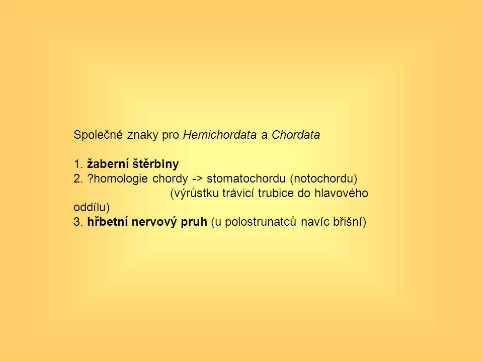 Společné znaky pro Hemichordata a Chordata 1. žaberní štěrbiny 2. ?homologie chordy -> stomatochordu (notochordu) (výrůstku trávicí trubice do hlavové