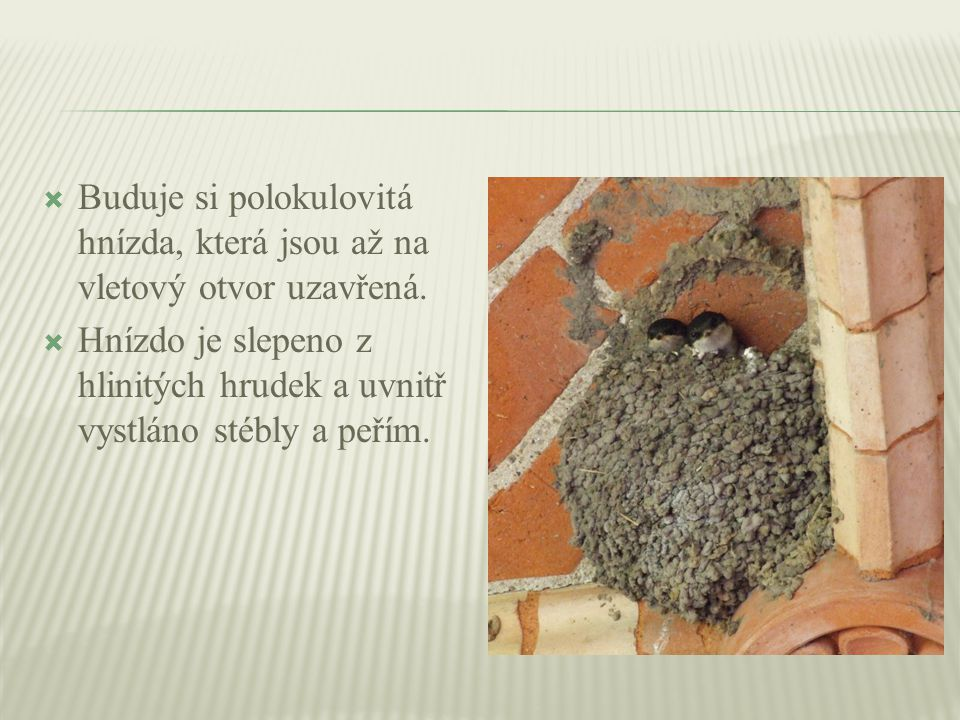  Buduje si polokulovitá hnízda, která jsou až na vletový otvor uzavřená.  Hnízdo je slepeno z hlinitých hrudek a uvnitř vystláno stébly a peřím.