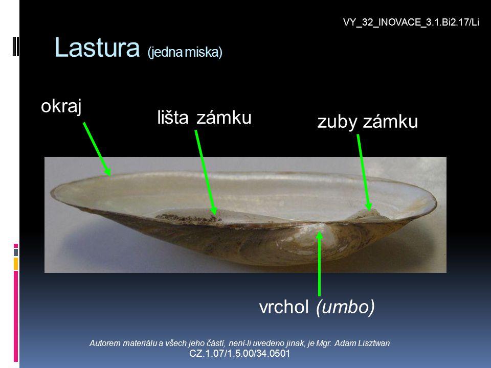 Lastura (jedna miska) okraj Autorem materiálu a všech jeho částí, není-li uvedeno jinak, je Mgr. Adam Lisztwan CZ.1.07/1.5.00/34.0501 vrchol (umbo) li
