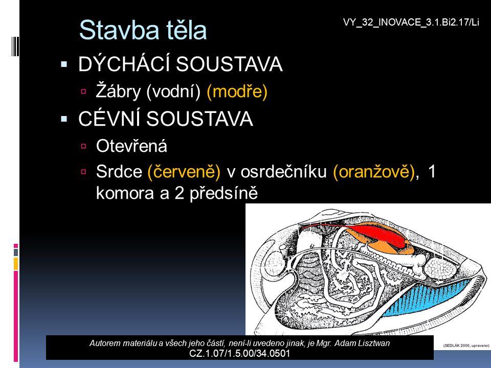 Stavba těla  DÝCHÁCÍ SOUSTAVA  Žábry (vodní) (modře)  CÉVNÍ SOUSTAVA  Otevřená  Srdce (červeně) v osrdečníku (oranžově), 1 komora a 2 předsíně Au