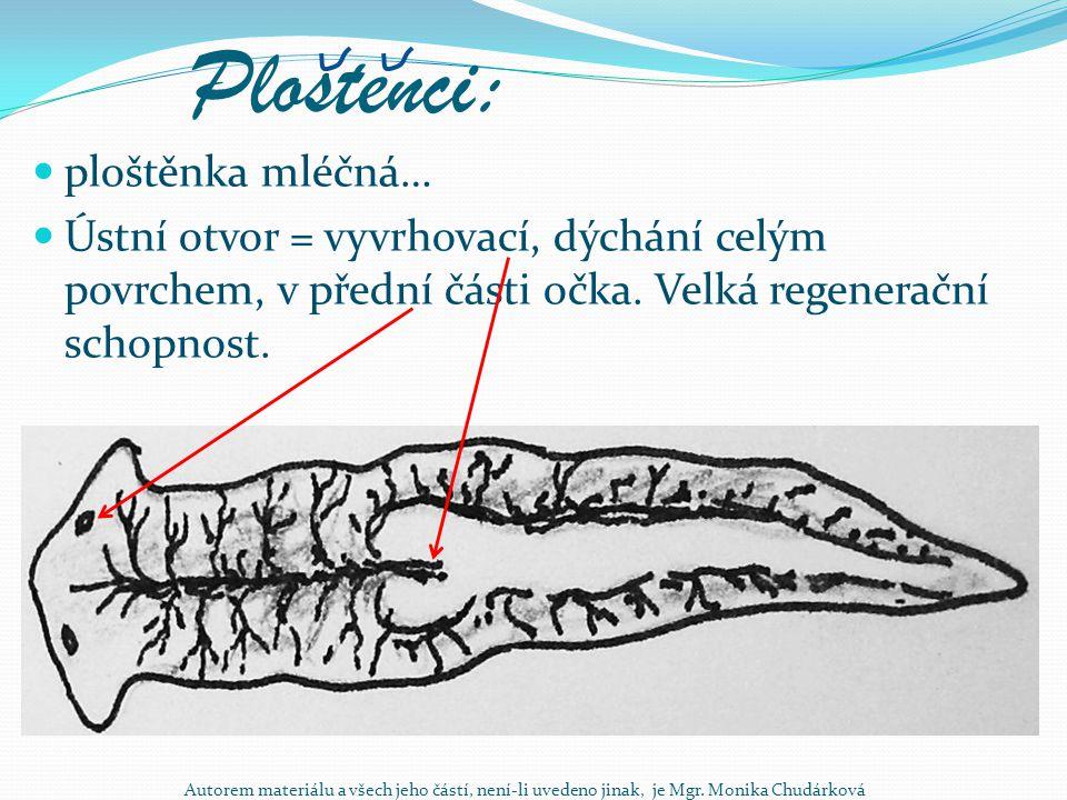 Mekkýsi: plži – okružák ploský, plovatka bahenní, bahenka živorodá mlži – škeble rybničná, perlotvorka říční Rozmnožování pohlavní, častý hermafroditismus, dýchání plícemi nebo žábrami podle druhu.