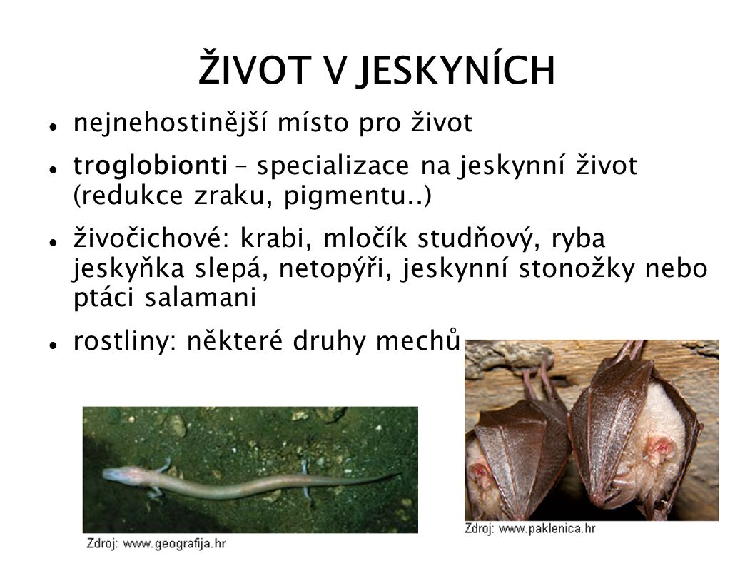 ŽIVOT V JESKYNÍCH nejnehostinější místo pro život troglobionti – specializace na jeskynní život (redukce zraku, pigmentu..) živočichové: krabi, mločík