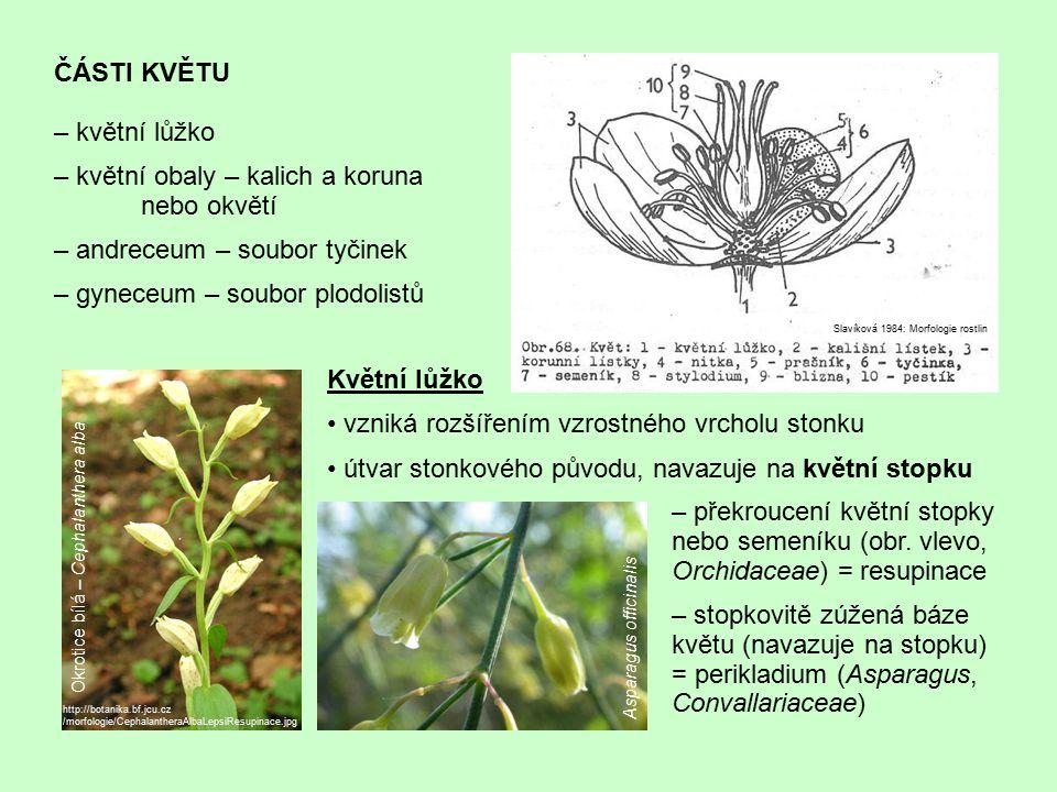 ČÁSTI KVĚTU – květní lůžko – květní obaly – kalich a koruna nebo okvětí – andreceum – soubor tyčinek – gyneceum – soubor plodolistů http://botanika.bf