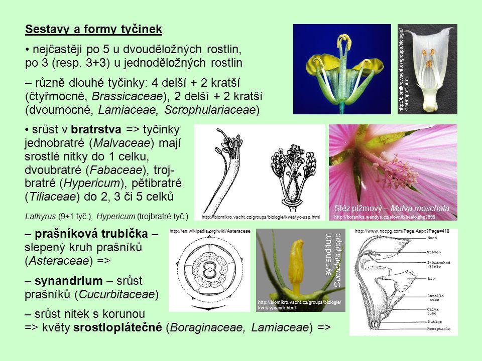 srůst v bratrstva => tyčinky jednobratré (Malvaceae) mají srostlé nitky do 1 celku, dvoubratré (Fabaceae), troj- bratré (Hypericum), pětibratré (Tilia