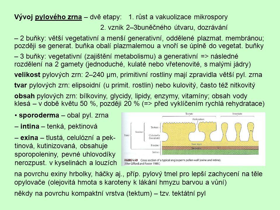 Vývoj pylového zrna – dvě etapy: 1. růst a vakuolizace mikrospory 2. vznik 2–3buněčného útvaru, dozrávání – 2 buňky: větší vegetativní a menší generat