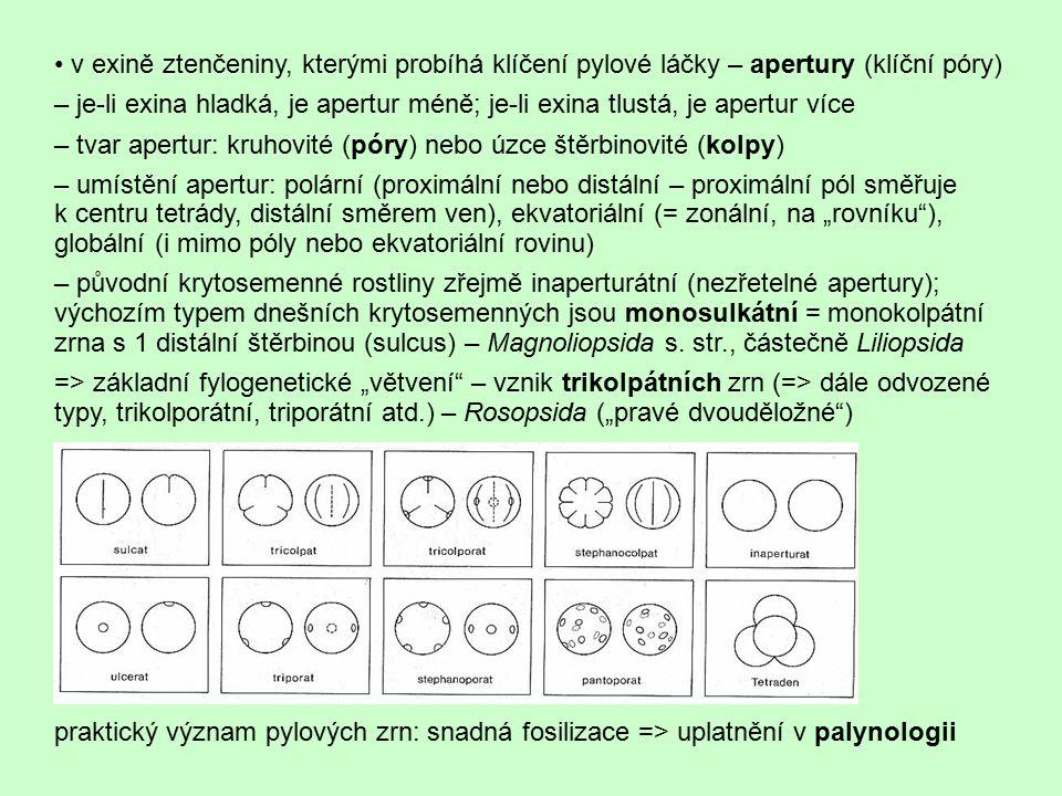 v exině ztenčeniny, kterými probíhá klíčení pylové láčky – apertury (klíční póry) – je-li exina hladká, je apertur méně; je-li exina tlustá, je apertu