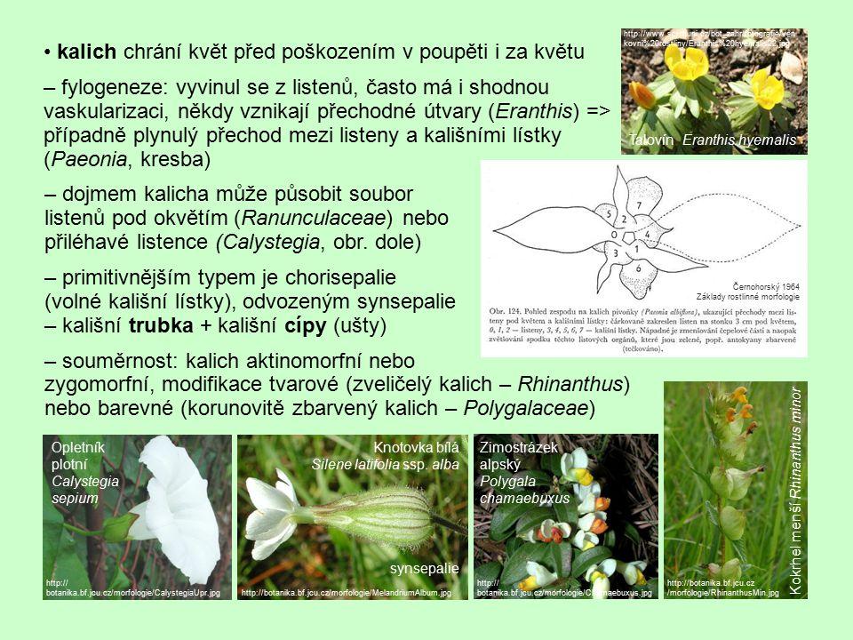 kalich chrání květ před poškozením v poupěti i za květu – fylogeneze: vyvinul se z listenů, často má i shodnou vaskularizaci, někdy vznikají přechodné