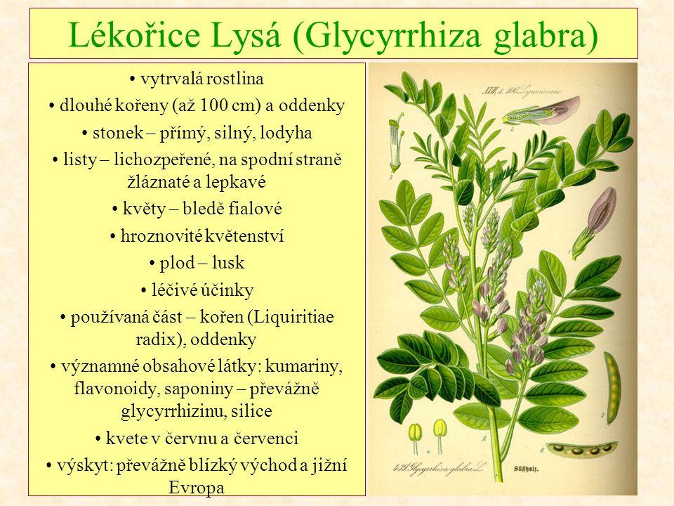 Lékořice Lysá (Glycyrrhiza glabra) vytrvalá rostlina dlouhé kořeny (až 100 cm) a oddenky stonek – přímý, silný, lodyha listy – lichozpeřené, na spodní