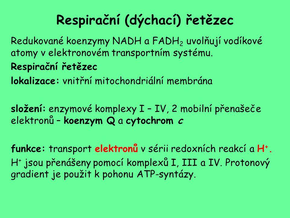 Respirační (dýchací) řetězec Redukované koenzymy NADH a FADH 2 uvolňují vodíkové atomy v elektronovém transportním systému. Respirační řetězec lokaliz