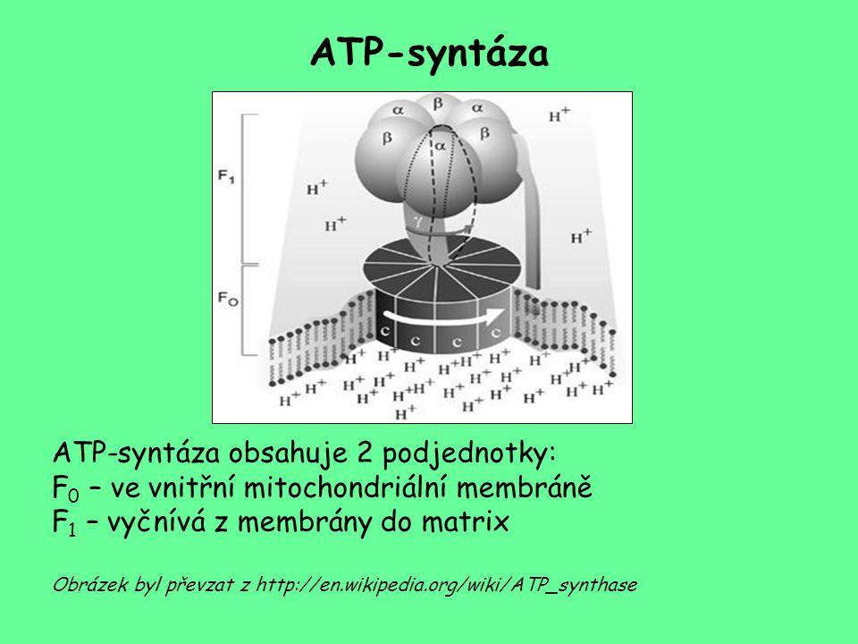 ATP-syntáza ATP-syntáza obsahuje 2 podjednotky: F 0 – ve vnitřní mitochondriální membráně F 1 – vyčnívá z membrány do matrix Obrázek byl převzat z htt