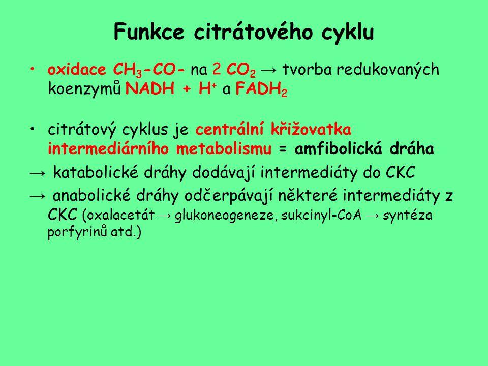 Funkce citrátového cyklu oxidace CH 3 -CO- na 2 CO 2 → tvorba redukovaných koenzymů NADH + H + a FADH 2 citrátový cyklus je centrální křižovatka inter