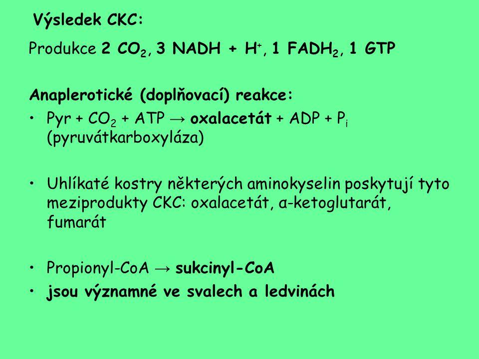 Výsledek CKC: Produkce 2 CO 2, 3 NADH + H +, 1 FADH 2, 1 GTP Anaplerotické (doplňovací) reakce: Pyr + CO 2 + ATP → oxalacetát + ADP + P i (pyruvátkarb