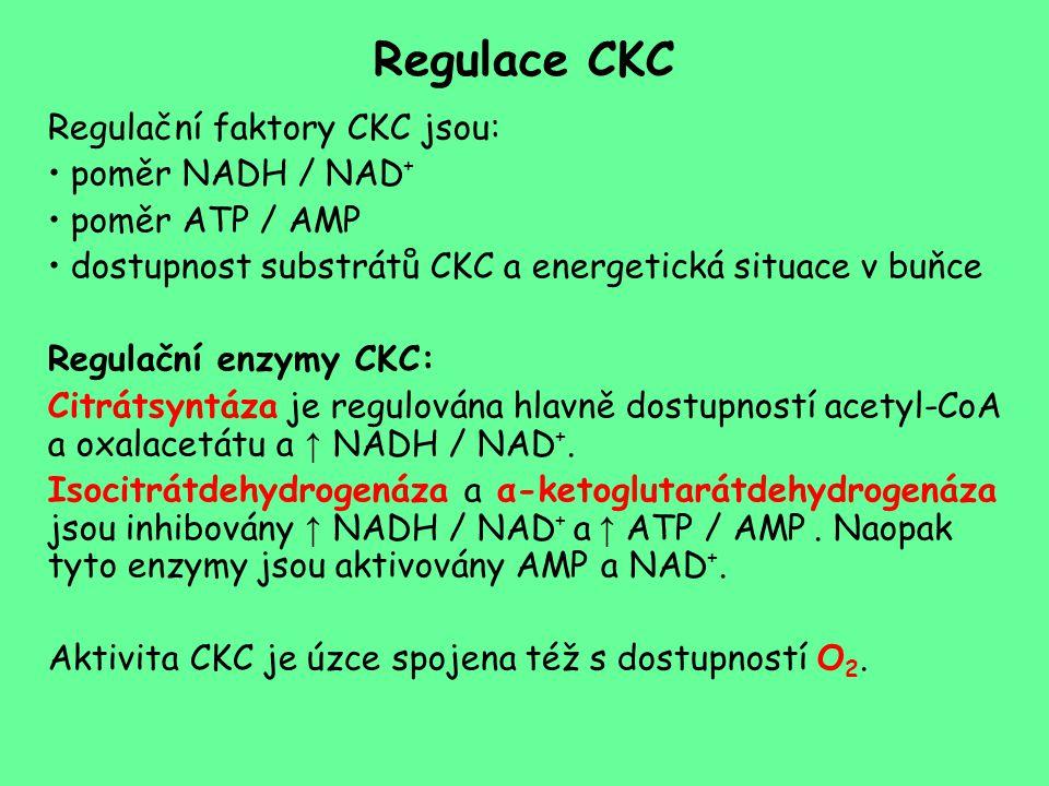 Regulace CKC Regulační faktory CKC jsou: poměr NADH / NAD + poměr ATP / AMP dostupnost substrátů CKC a energetická situace v buňce Regulační enzymy CK