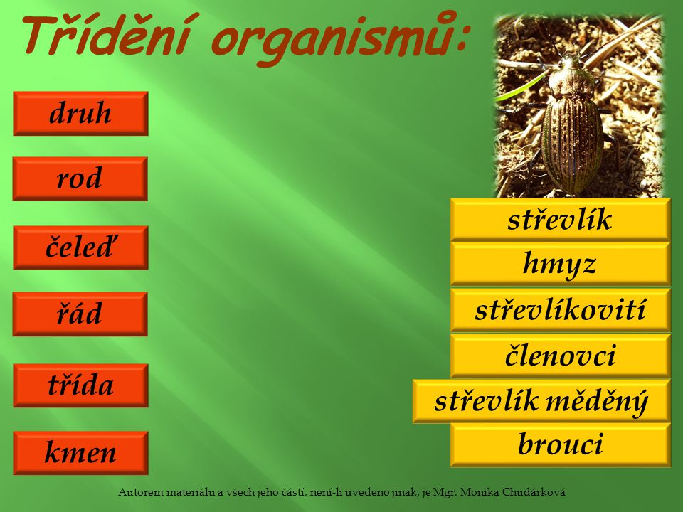 Třídění organismů: druh třída řád čeleď rod střevlík měděný hmyz brouci střevlíkovití střevlík kmen členovci Autorem materiálu a všech jeho částí, není-li uvedeno jinak, je Mgr.