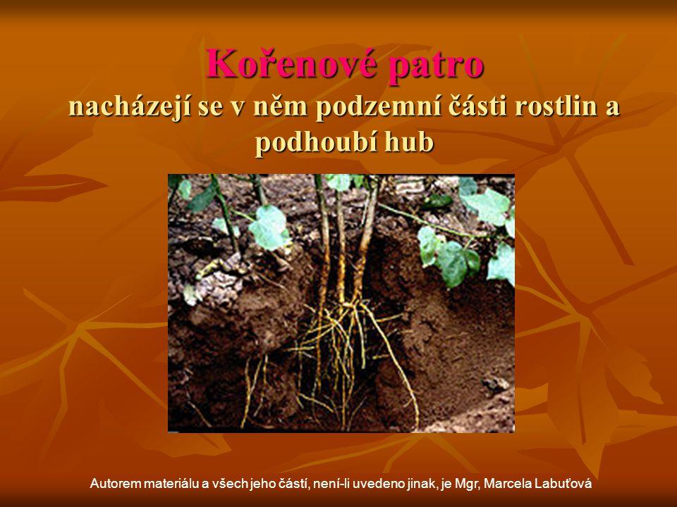 Mechové patro najdeme v něm mechy a houby Autorem materiálu a všech jeho částí, není-li uvedeno jinak, je Mgr, Marcela Labuťová