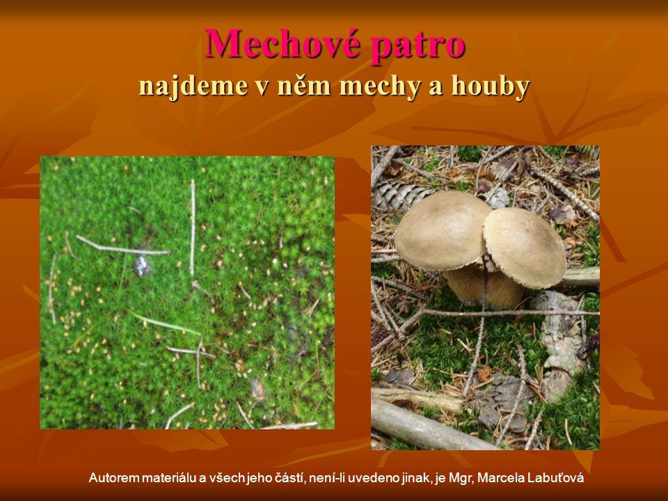 Bylinné patro je bohaté především v listnatých a smíšených lesích Autorem materiálu a všech jeho částí, není-li uvedeno jinak, je Mgr, Marcela Labuťová