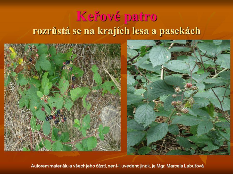 Stromové patro Autorem materiálu a všech jeho částí, není-li uvedeno jinak, je Mgr, Marcela Labuťová