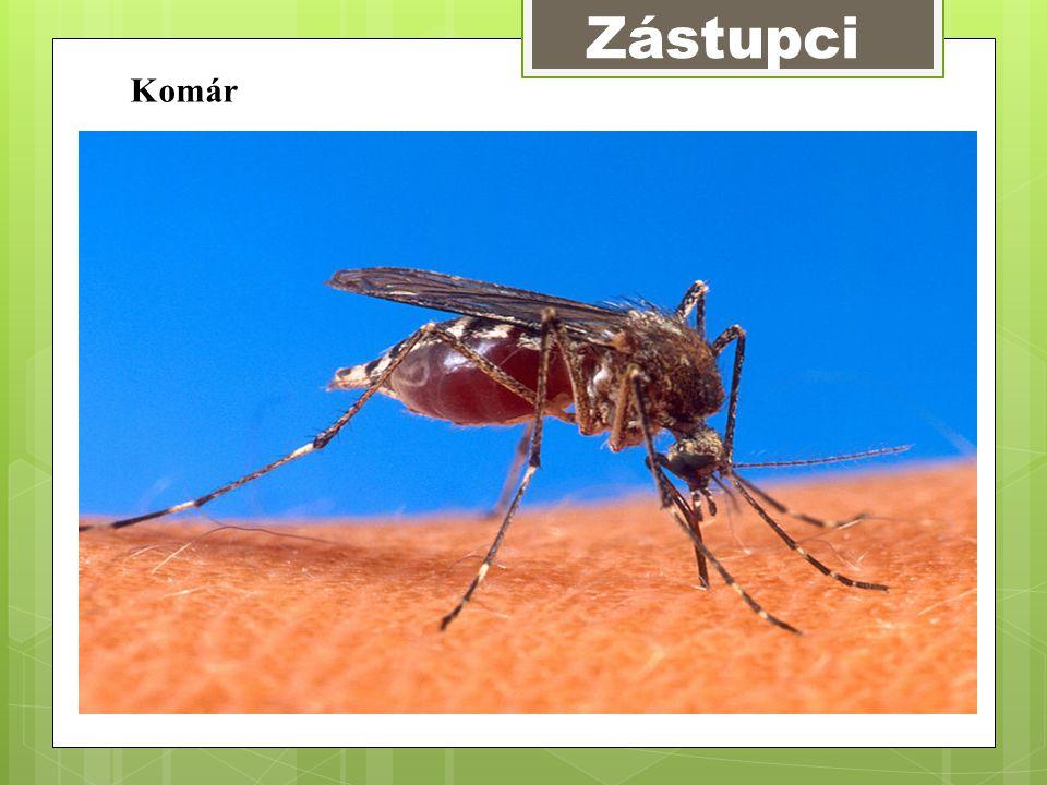 Zástupci Komár