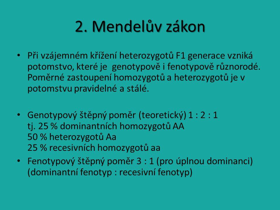 2. Mendelův zákon Při vzájemném křížení heterozygotů F1 generace vzniká potomstvo, které je genotypově i fenotypově různorodé. Poměrné zastoupení homo