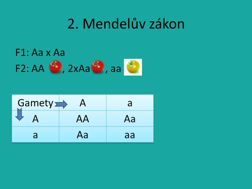 2. Mendelův zákon F1: Aa x Aa F2: AA, 2xAa, aa