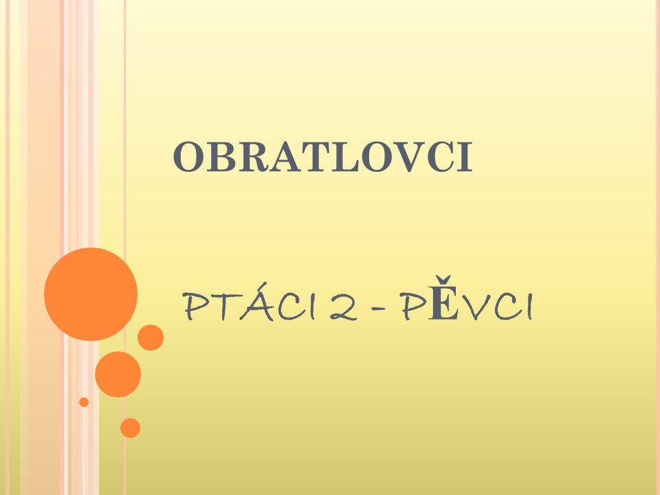 OBRATLOVCI PTÁCI 2 - P Ě VCI