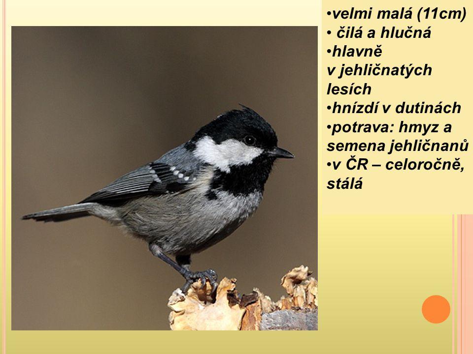 velmi malá (11cm) čilá a hlučná hlavně v jehličnatých lesích hnízdí v dutinách potrava: hmyz a semena jehličnanů v ČR – celoročně, stálá
