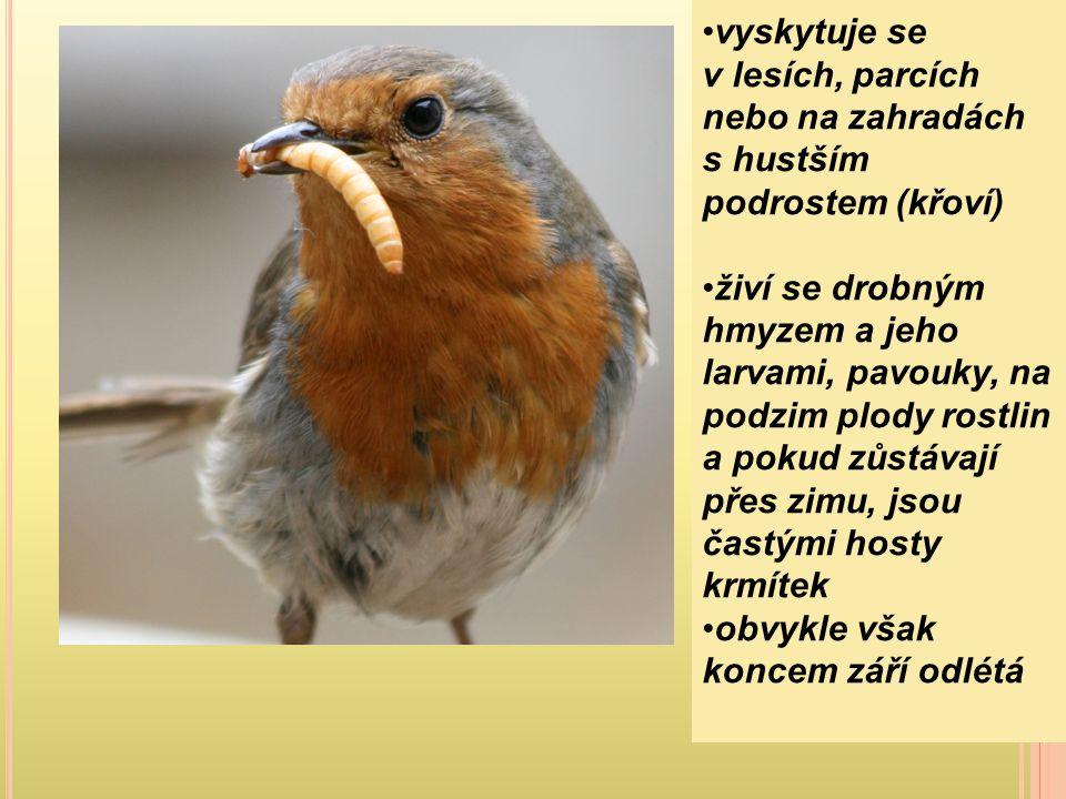 v létě se živí především hmyzem, plení ptačí hnízda (vejce i holátka), loví ptáky, které pevně přidržuje nohama a ubíjí zobákem, loví i myši, ještěrky a žáby na podzim dává přednost rostlinné potravě, zvláště žaludům a bukvicím, sbírá také lískové ořechy, různé bobule a semena při nadbytku potravy si dělá zásoby žaludů, v zemi vyklove zobákem díru a do ní žaludy vloží, pak otvor zacpe; ze žaludů, které nenajde, na jaře mnohé vyklíčí sklady si také dělá ve skalních štěrbinách nebo v dutinách stromů, v takovém skladu může být až několik kilogramů žaludů