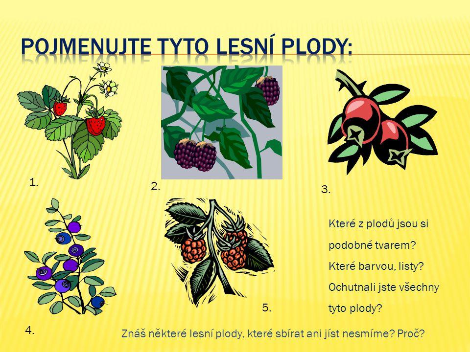 Které z plodů jsou si podobné tvarem? Které barvou, listy? Ochutnali jste všechny tyto plody? Znáš některé lesní plody, které sbírat ani jíst nesmíme?