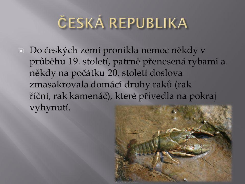  Do českých zemí pronikla nemoc někdy v průběhu 19. století, patrně přenesená rybami a někdy na počátku 20. století doslova zmasakrovala domácí druhy